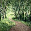 Ο θρύλος του στοιχειωμένου Igorchem Road στη Γκόα της Ινδίας 8