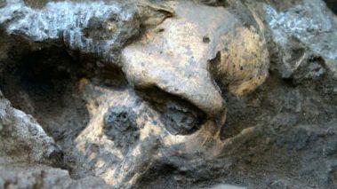Κρανίο 5 - Ένα ανθρώπινο κρανίο ενός εκατομμυρίου ετών ανάγκασε τους επιστήμονες να επανεξετάσουν την πρώιμη ανθρώπινη εξέλιξη