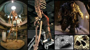 Lịch sử ẩn giấu được tiết lộ: Bộ xương khổng lồ cao 7 mét được trưng bày 3