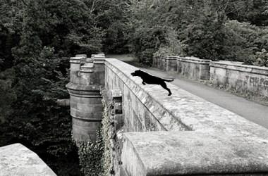 De Dog Suicide Bridge Of Scotland Overtoun Bridge