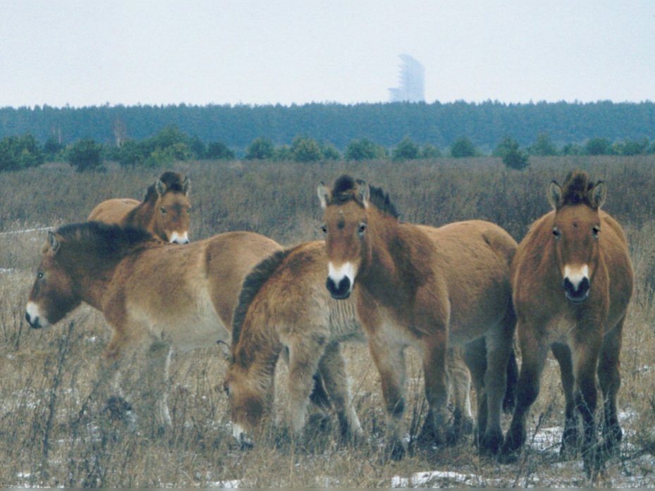Photo de la catastrophe de Tchernobyl.