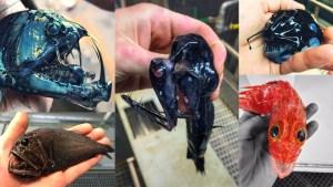 Strange animals and sea creatures