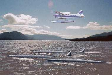 Illie - Quái vật Alaska bí ẩn của hồ Iliamna 4