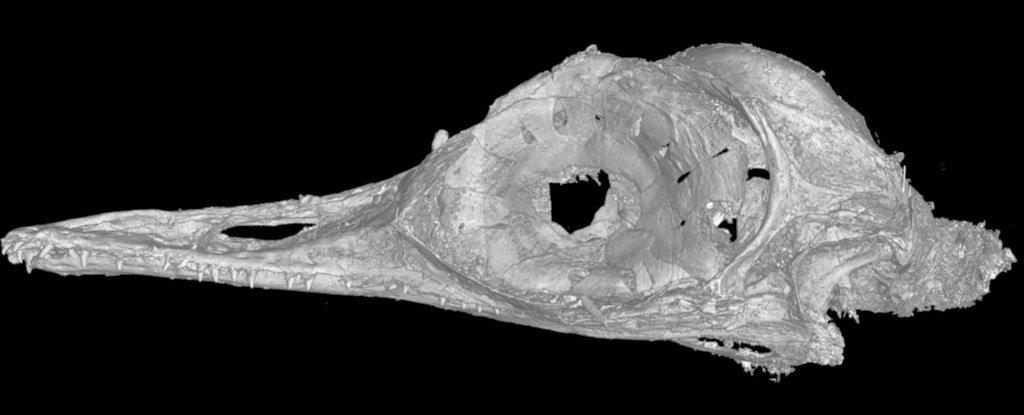 Μια εικόνα από αξονική τομογραφία του μικρότερου κρανίου δεινοσαύρων. Φωτογραφία: Li Gang / Πανεπιστήμιο Γεωεπιστημών της Κίνας