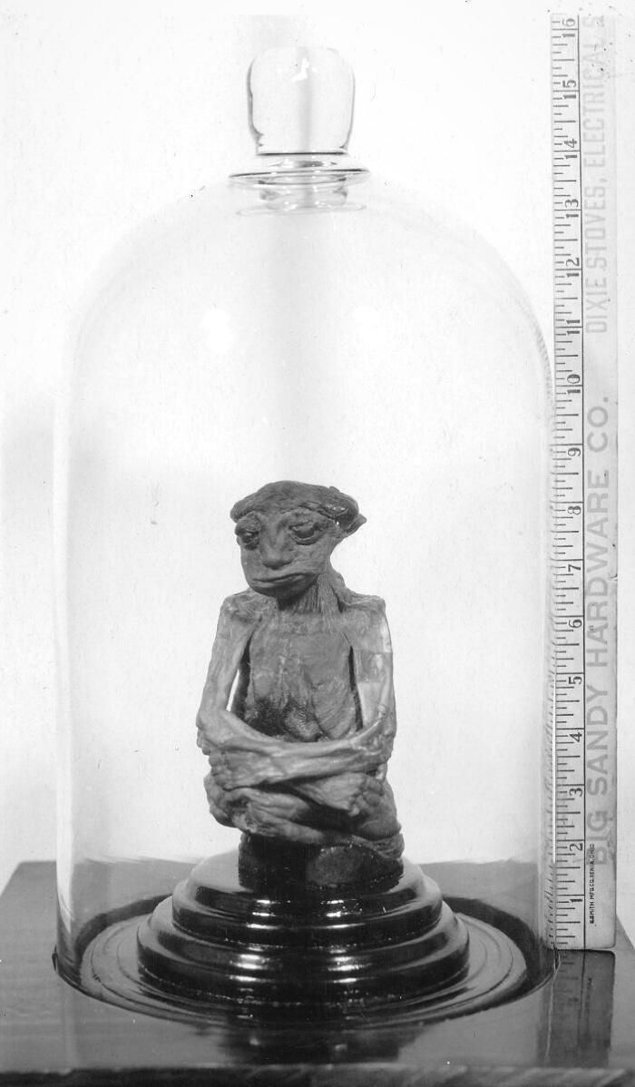Pedro bên trong mái vòm bằng kính của mình, với một cái thước để hiển thị kích thước