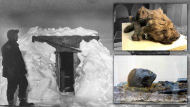 10 khám phá bí ẩn nhất được thực hiện trong lớp băng vĩnh cửu ở Bắc Cực và Nam Cực 3