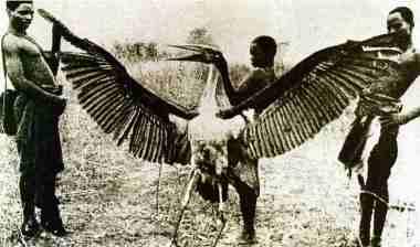 Kongamato - ai nói rằng pterosaurs đã tuyệt chủng? 7