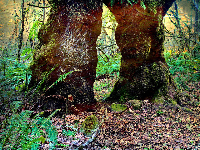 Giantess Two Trunks
