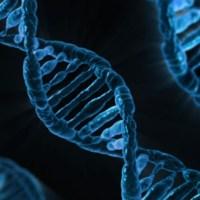 ミトコンドリアDNAが人類の進化を明確にする