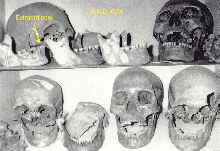 Cráneos extraídos de la cueva Lovelock. Foto tomada hace cerca de 40 años por el investigador Don Monroe.