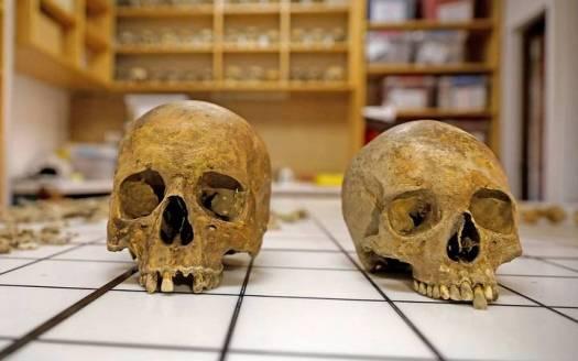 Cráneos pertenecientes al hombre y a la mujer hallados dentro del sarcófago.