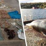 Hallan otra ballena llena de plástico, esta vez en Italia
