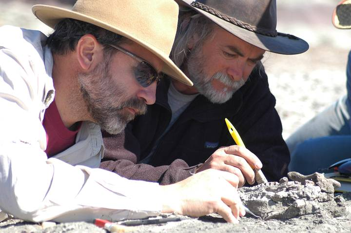 Digging up Scrat. Pseudotherium argentinus