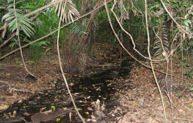 One of the channels that still has a watercourse during the wet season. network of Mayan channels and crops