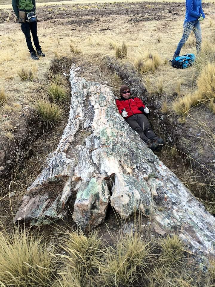 El ancestral árbol gigante.