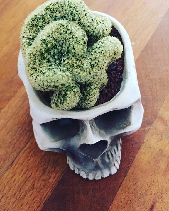 brain-cactus-841528_960_720