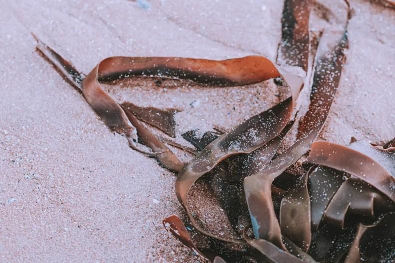 seaweed healing bath recipe