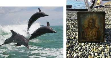 A Colonel on the beach sees the impossible that should not be in the world..12 Dolphins Return Icon of the Virgin Mary to a Sandy Beach