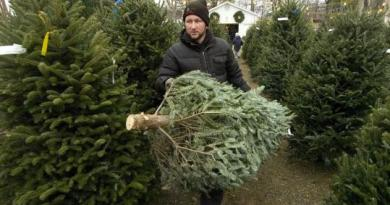 Why Christmas Tree Prices Are So High This Year