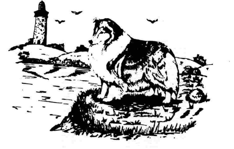 Shoreline Shetland Sheepdog Club Of Baytown