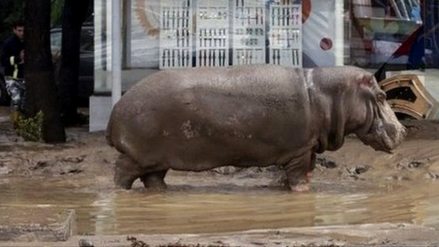 Flood in Georgia:Warning over escaped zoo animals