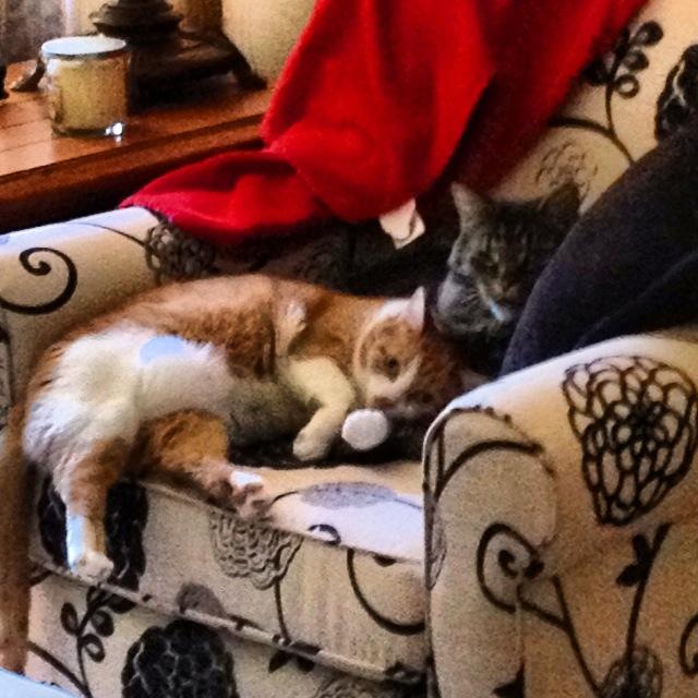 happy-caturday