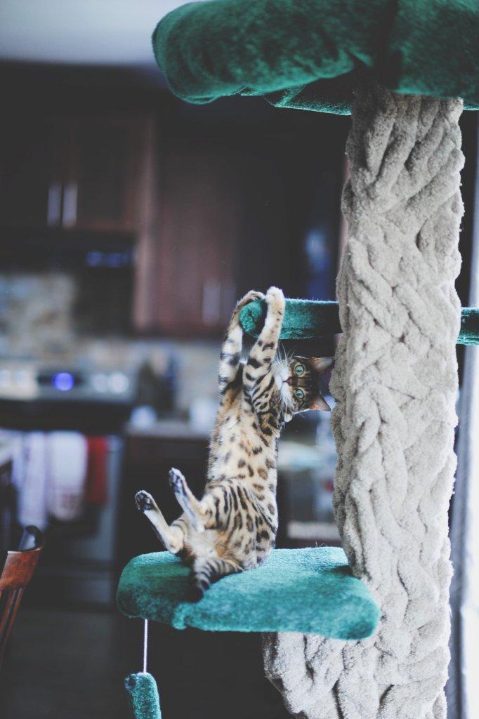Petcurean NowFresh Cat Food + GIVEAWAY