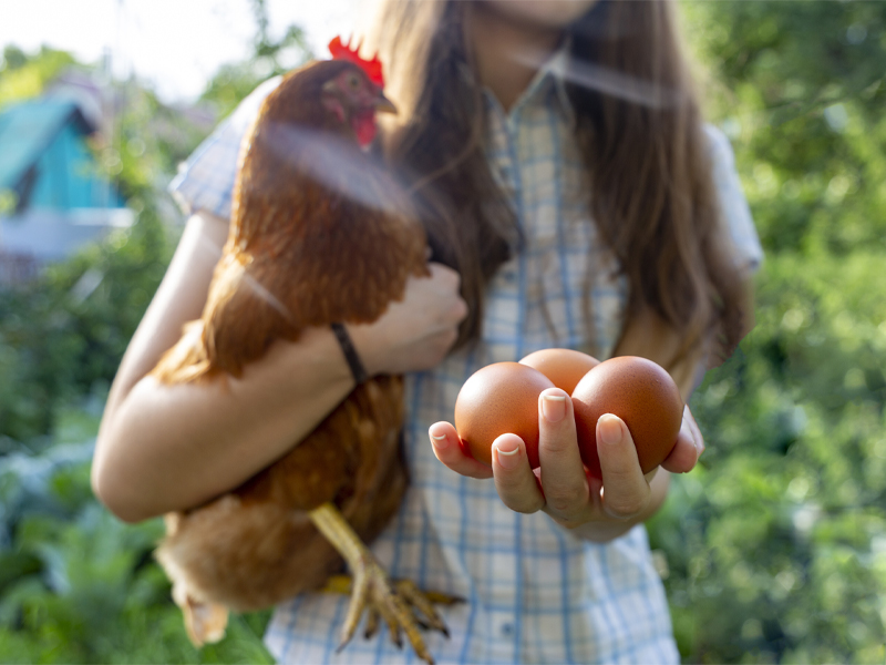 Young Girl with Fresh Eggs