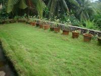 Terrace Garden | My Survival Forum | Survivalist, Prepper ...