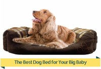 Top 5 Best Dog Beds For Large Dogs [2017 Buyers Guide]