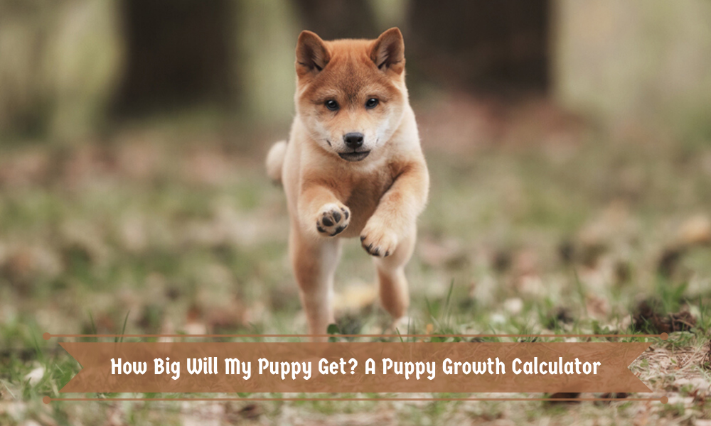 If you like to purchase food in bulk, freeze fresh produce when it's in sea. How Big Will My Puppy Get A Puppy Growth Calculator