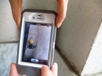 A volunteer uses the Nature Spotter App to photograph a Black Widow spider