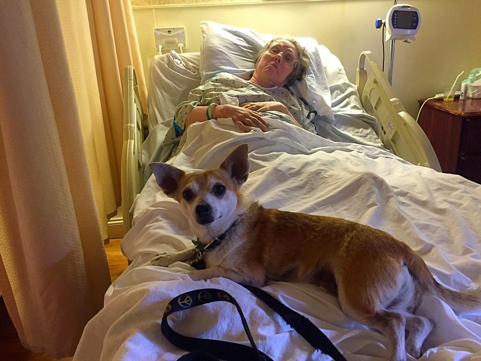 michelle maskaly dogs chemo cancer lymphoma