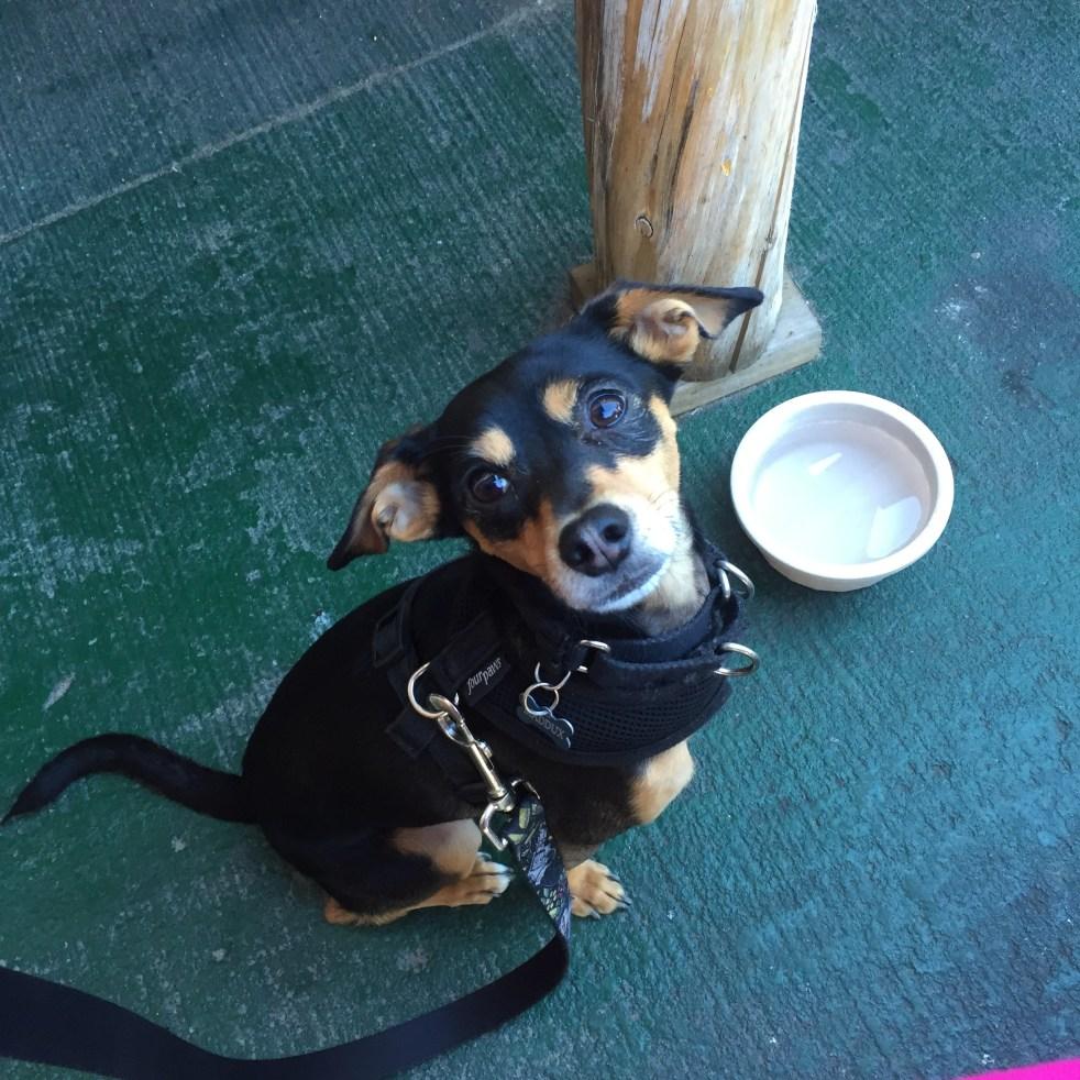 national black dog day michelle maskaly