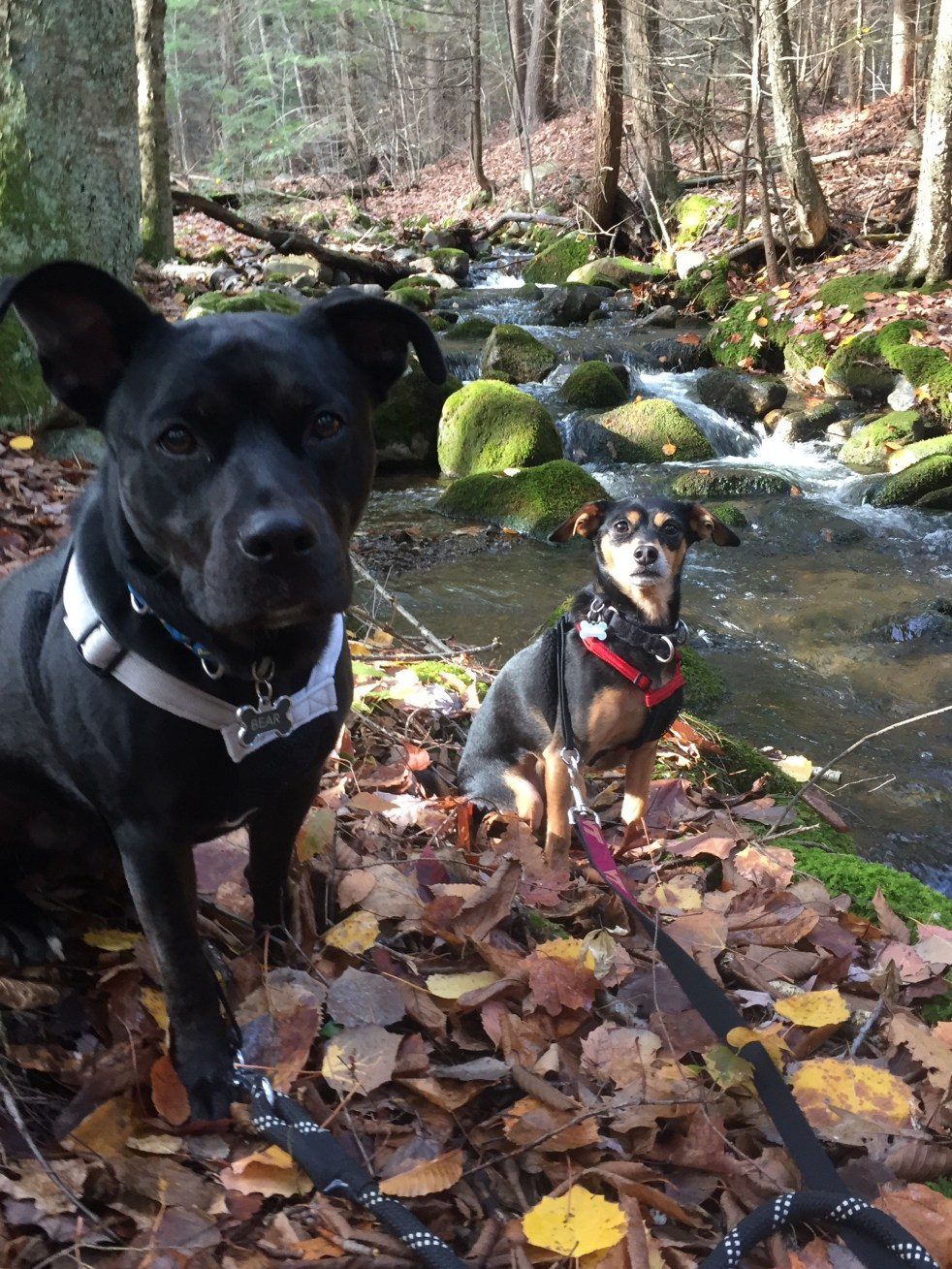 hiking with dogs lake george michelle maskaly