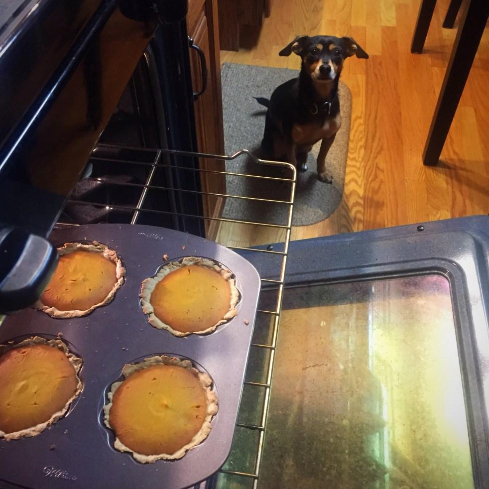 dog friendly thanksgiving recipes