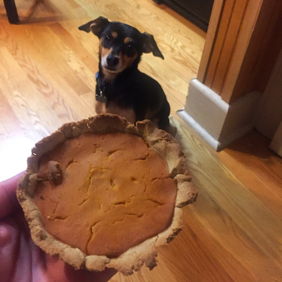 easy pumpkin pie for dogs michelle maskaly