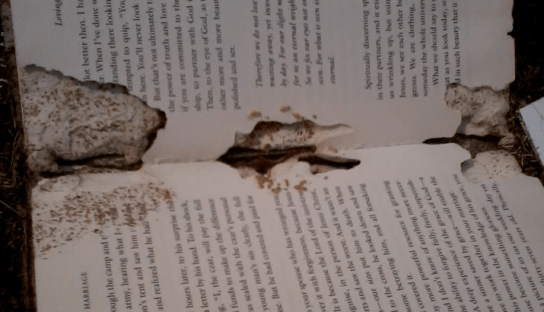 Termites Can Even Damage Books