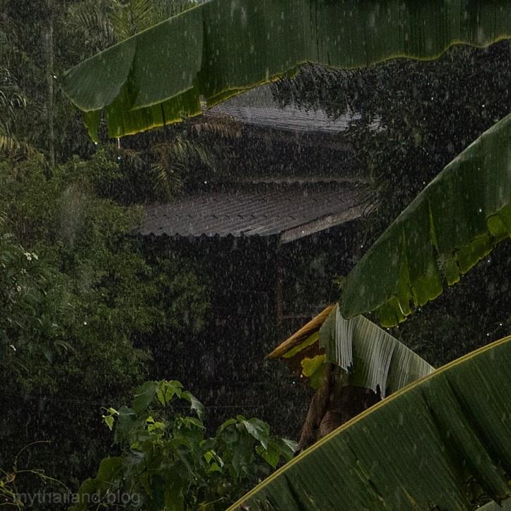 The Jungle Home