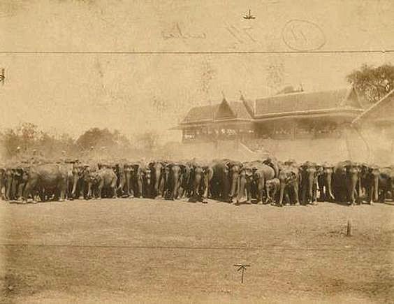 Elephants in Ayuttaya, Thailand in 1900