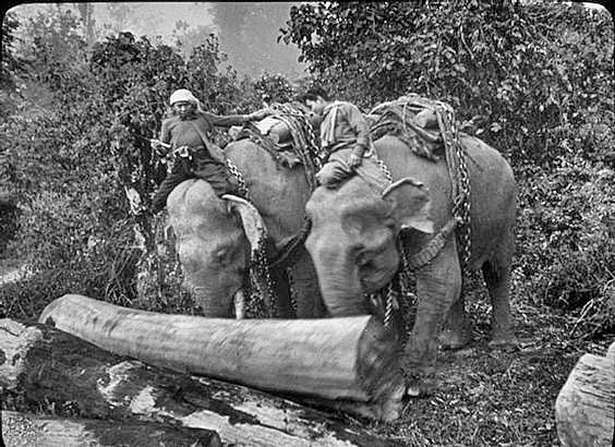 Vintage photo of Elephants working in Thailand