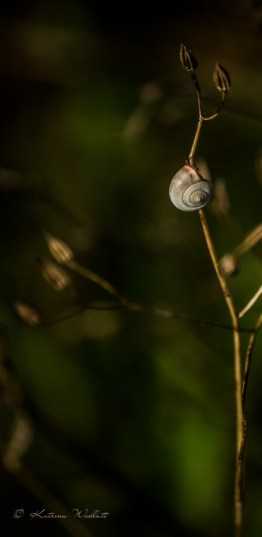 Small brown snail on stem