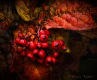red berries and leaf