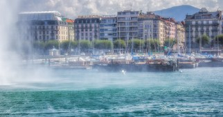 Swan landing in spray from Geneva's jet d'eau