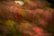 blurred red leaves