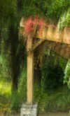 blurred trellis with red vine