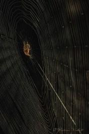 dark into light spider on web