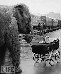 writing prompt 1 elephant