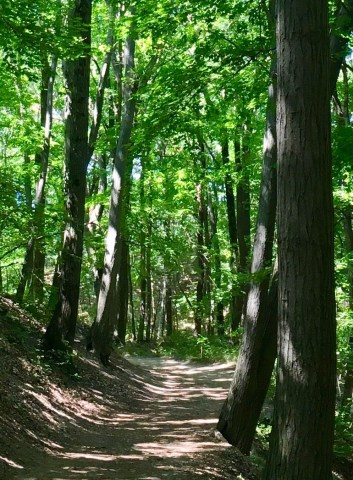 dirt trail through a canopy of trees with sun filtering through