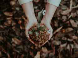 hands together forming a heart shape, holding soil with a small plant